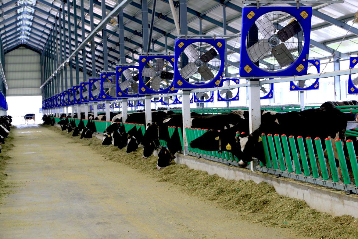 Купить вентиляторы для коров в Казахстане