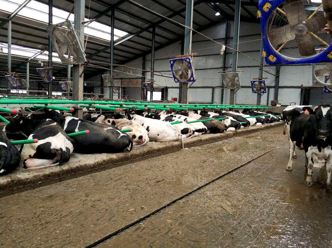 Вентиляторы для коров TERRUI от agral.kz