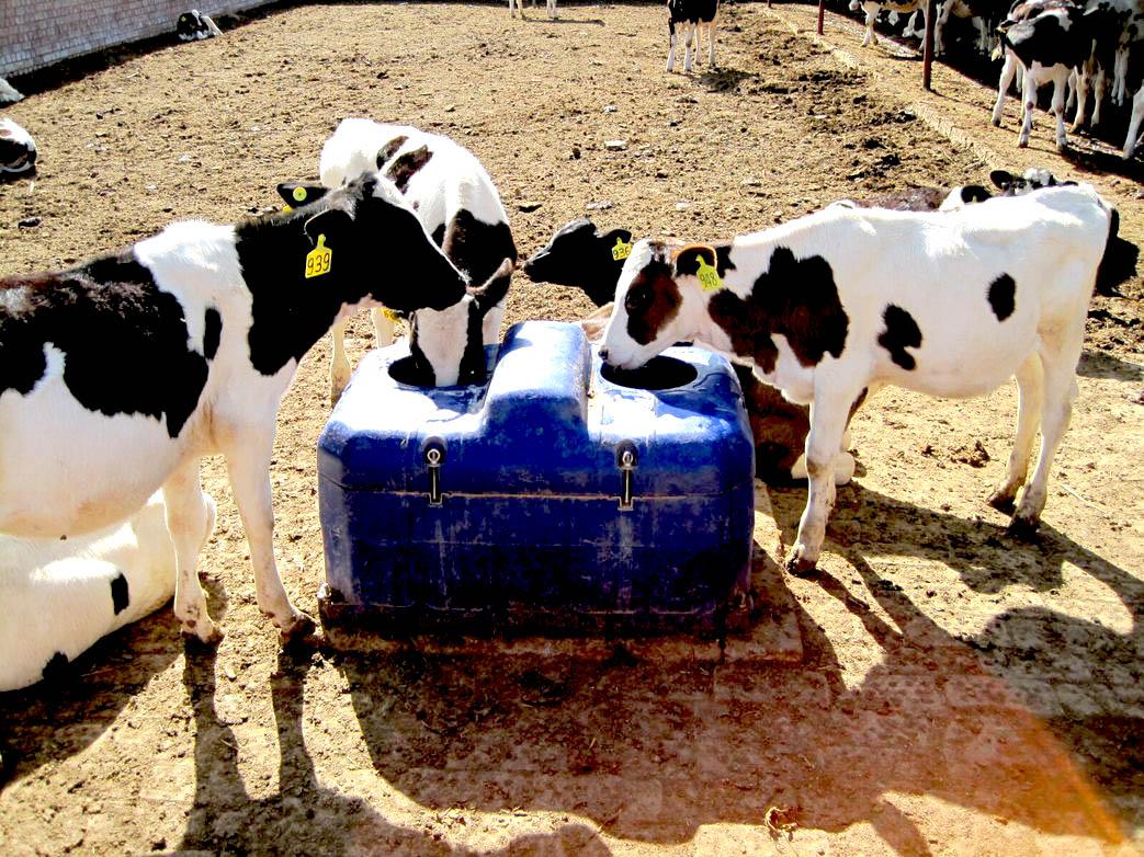 Автопоилка для коров